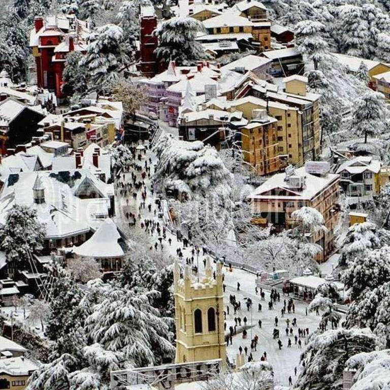 Bị tuyết phủ trắng © Jannat-e-Shimla / Facebook