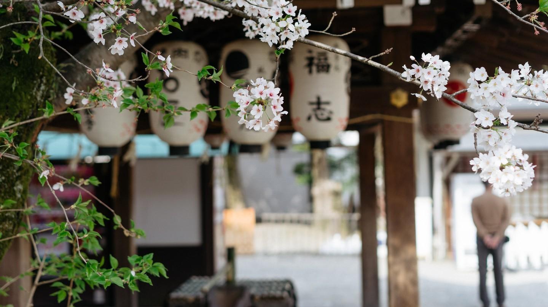 Công viên Maruyama Koen   Jaemin Lee / © Culture Trip
