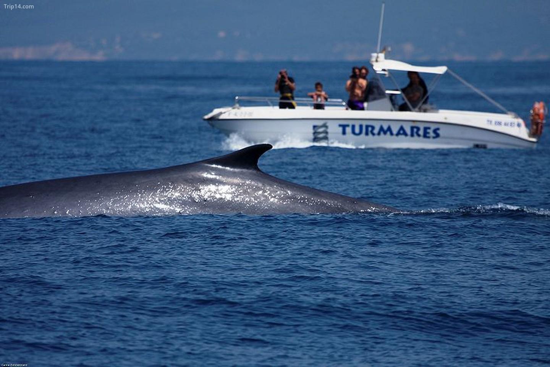 Ngắm cá voi ở eo biển Gibraltar    