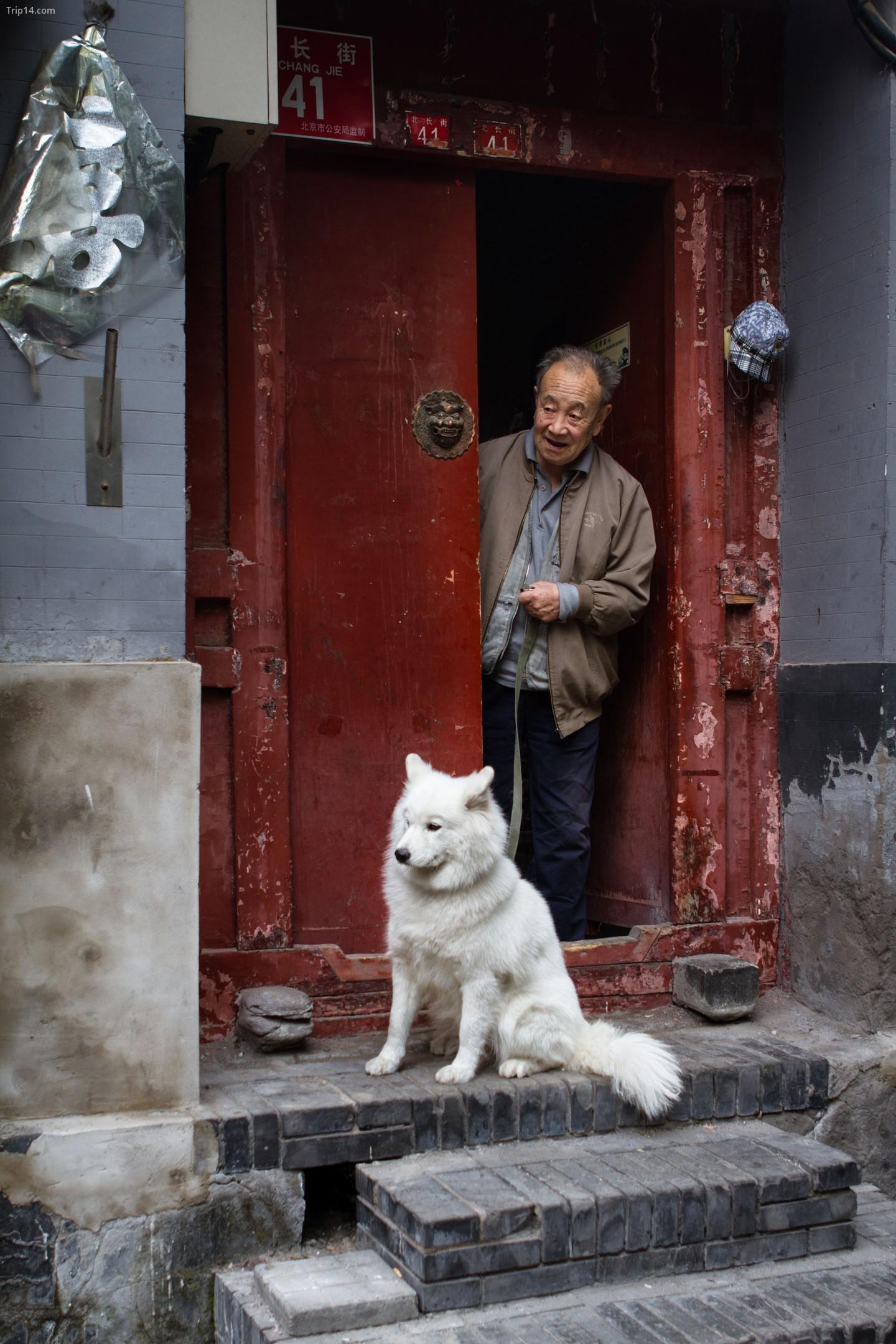 Người đàn ông Trung Quốc và Samoyed của anh ta   |