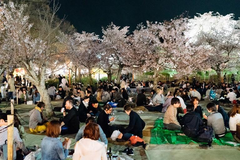 Công viên Maruyama