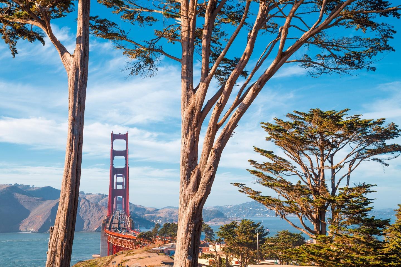 Cầu Cổng Vàng nổi tiếng được bao quanh bởi những cây bách cổ thụ tại Công viên Presidio vào một ngày nắng đẹp với bầu trời xanh và mây, San Francisco, California