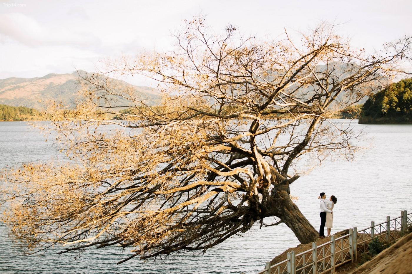 Lần này là cây cô đơn ở Biển hồ Pleiku