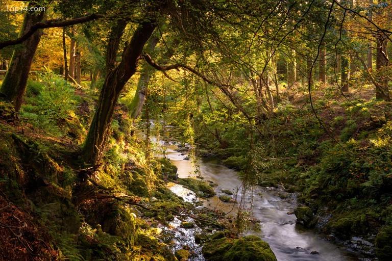 Công viên Rừng Tollymore giống như một thứ gì đó trong một bộ phim giả tưởng © ftíchreland.com / Christopher Hill Photographic / Alamy Kho ảnh