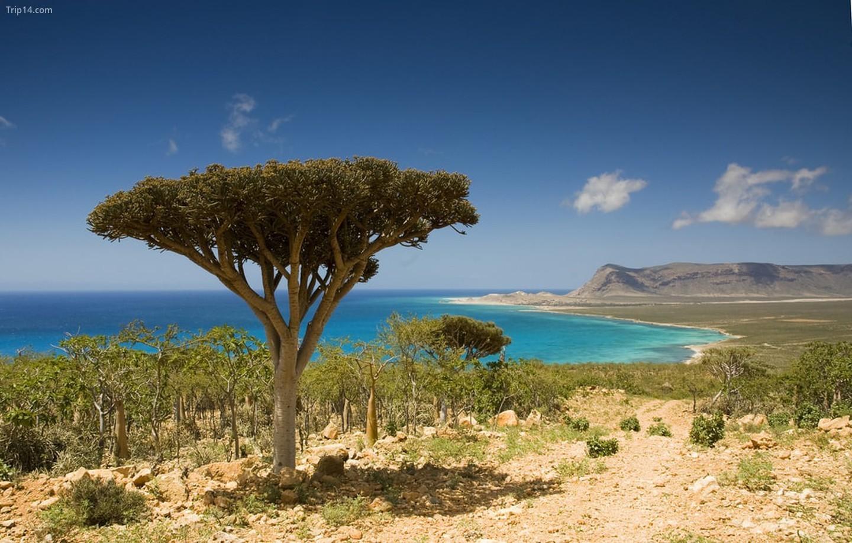 Socotra, Yemen   |