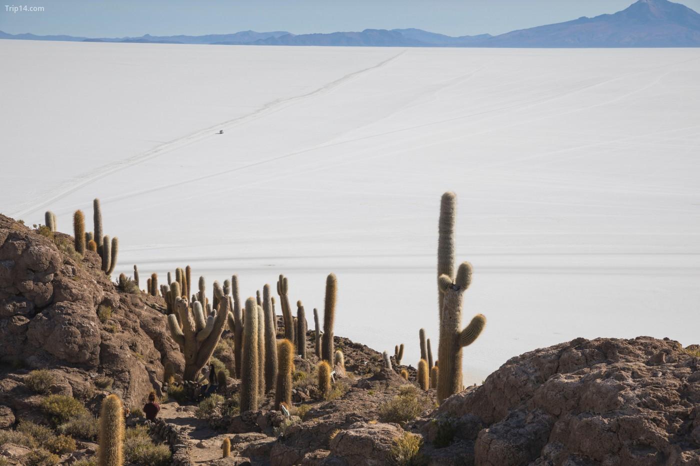 Căn hộ muối Uyuni ở Bolivia là căn hộ muối lớn nhất thế giới và có những hòn đảo rải rác bằng xương rồng | © Cavan Images / Alamy Kho ảnh