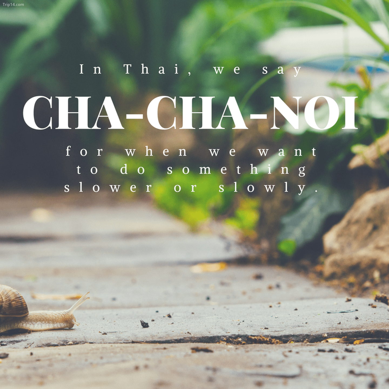 ช้าๆ หน่อย: Cha-cha-noi