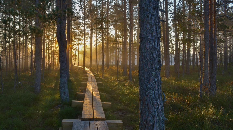 Những công viên quốc gia tuyệt đẹp ở Estonia