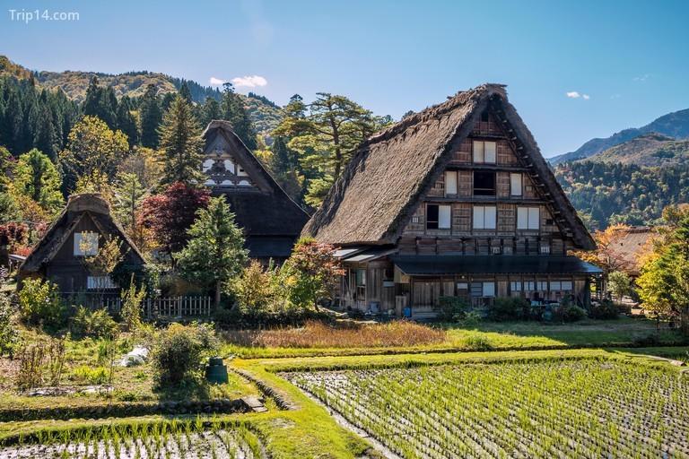 nhà lợp tranh theo phong cách Gassho ở Shirakawa-go