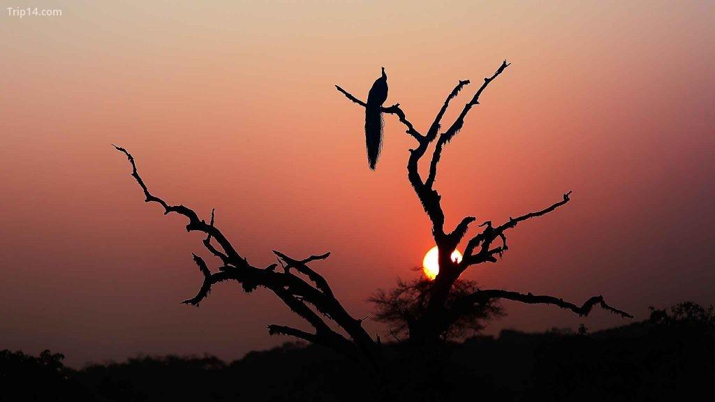 Vườn quốc gia Yala | © Kolitha de Silva / Flickr - Trip14.com