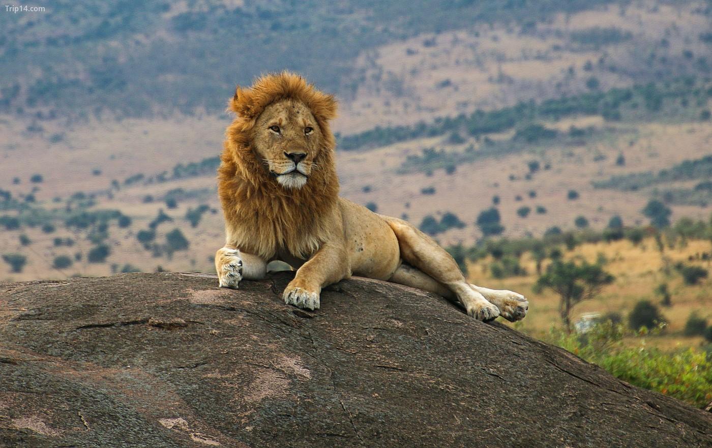 Xem Big Five trong môi trường sống tự nhiên của chúng tại Khu bảo tồn Ngorongoro ở Tanzania | © Du lịch Châu Phi / Alamy Kho ảnh
