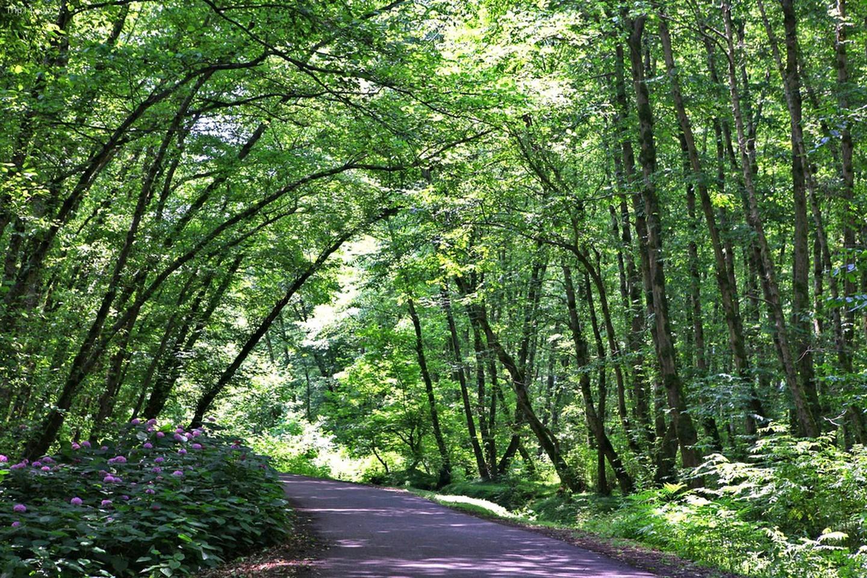 Rừng Gisum ở phía bắc tỉnh Gilan