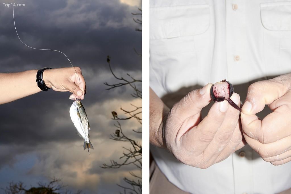 Trái: Một con cá mòi Amazon. Phải: Du khách ăn nho Amazon