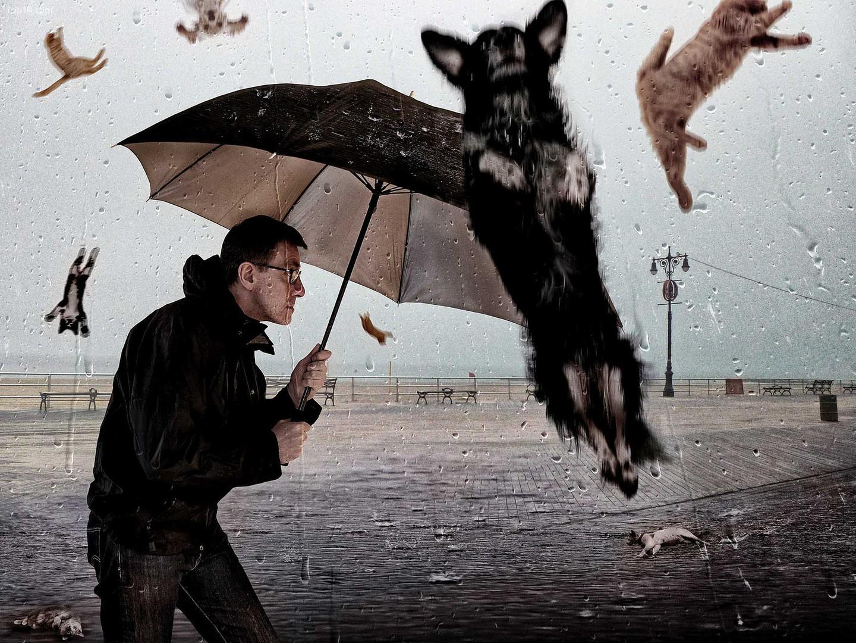 Trời mưa mèo mưa chó