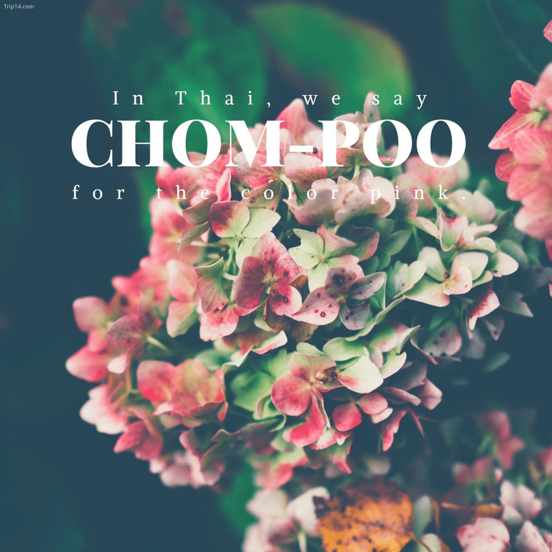 ช ชมพู: Chom-poo