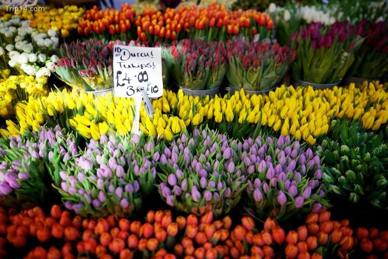 Hoa trên đường hoa Colunmbia - Trip14.com