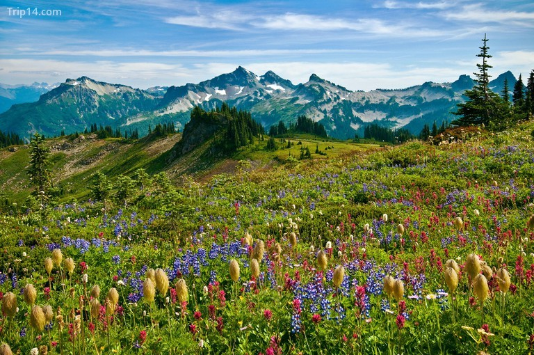 Vườn quốc gia Mount Rainier, Hoa Kỳ