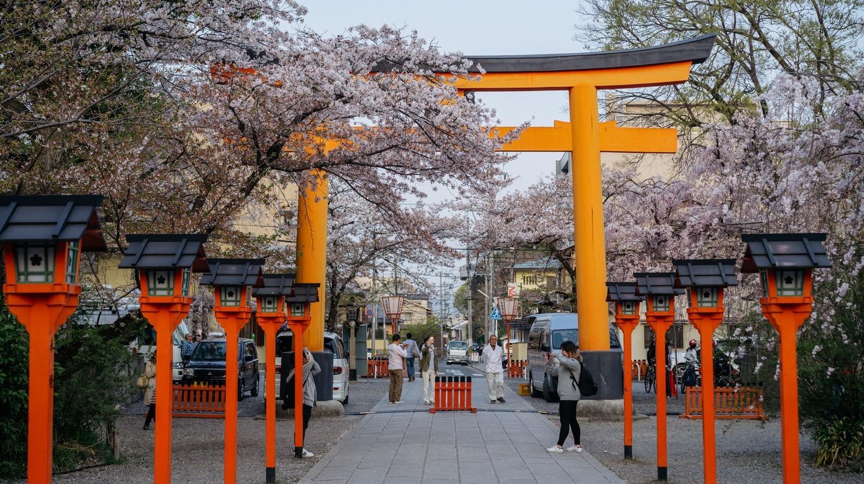 Hoa anh đào nở ở đền Hirano, Nhật Bản. Ảnh: Jaemin Lee / © Culture Trip