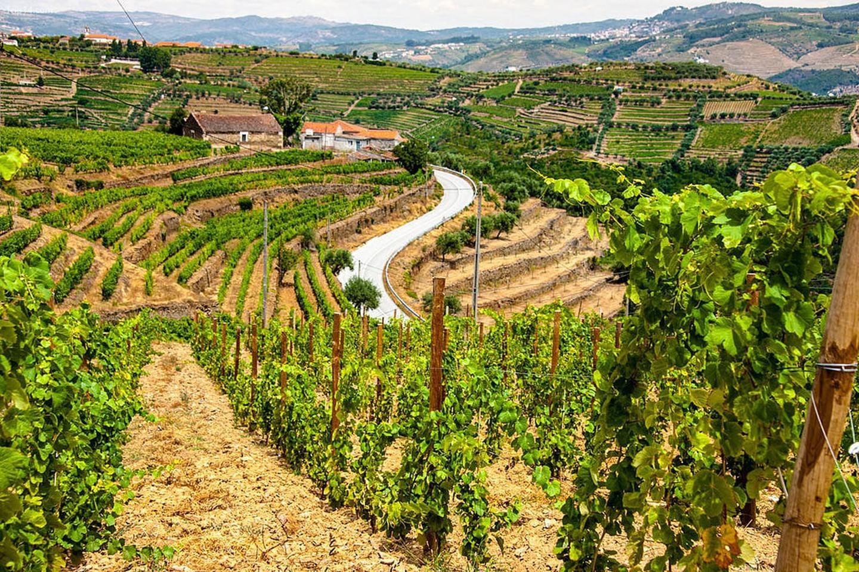 Có lẽ vùng rượu vang Douro là nơi yêu thích của bạn.   |
