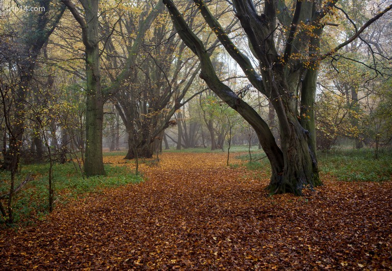 Lịch sử của Rừng Hatfield kéo dài khoảng 2.000 năm © Michael Howes / Alamy Kho ảnh