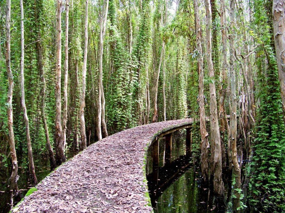 Khám phá con đường xuyên rừng tràm dài nhất Việt Nam