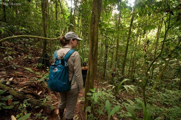Vườn quốc gia Yasuni, Ecuador © Matt Hewitt / Flickr