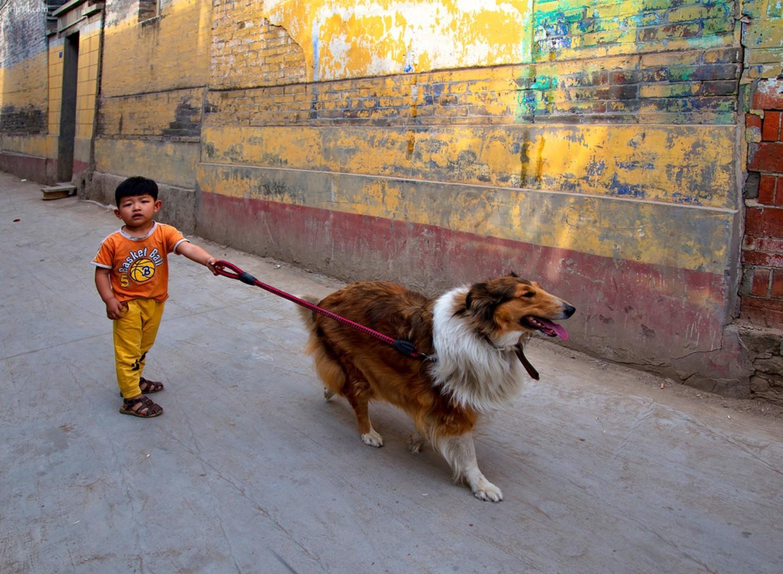 Cậu bé dắt chó đi dạo ở Trung Quốc   |