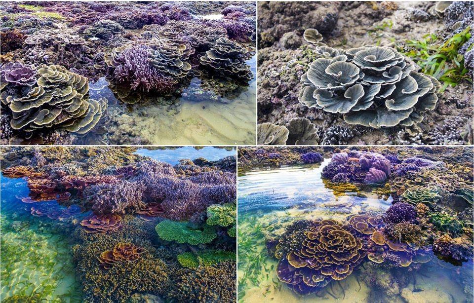 Đi Phú Yên đừng quên ghé thăm Hòn Yến ngắm san hô