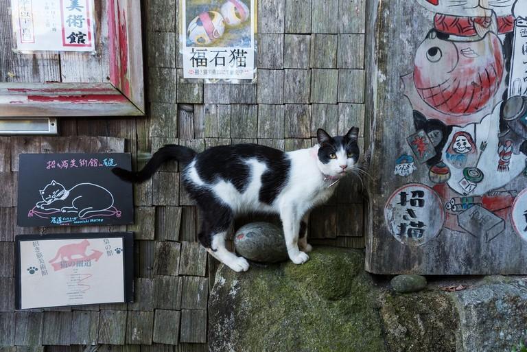 Cat Alley, Onomichi