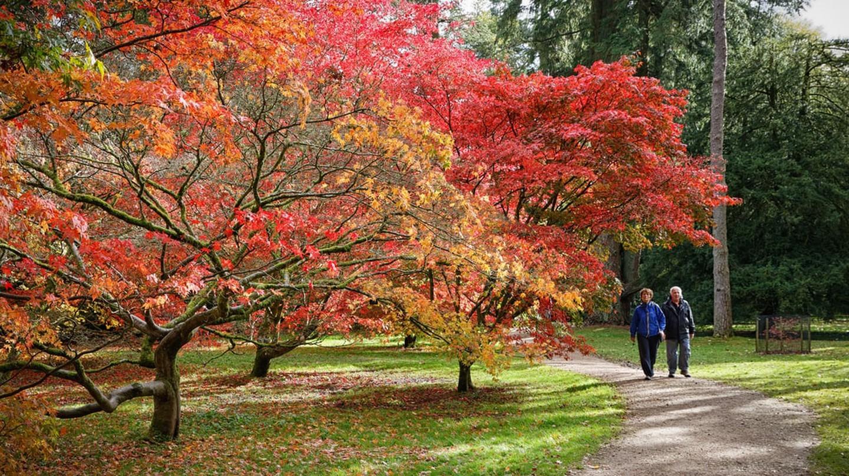 Dưới cây acer    © Alistair Campbell / Flickr