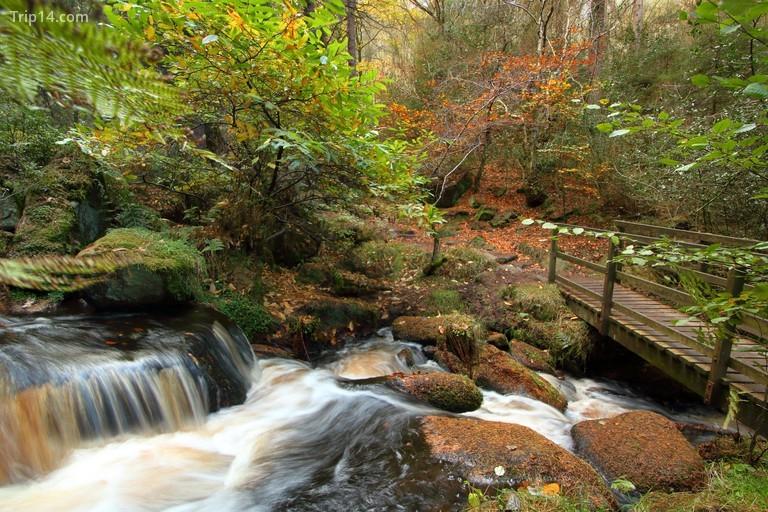 Khu bảo tồn thiên nhiên Wyming Brook