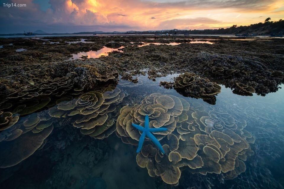 san hô ở Hòn Yến