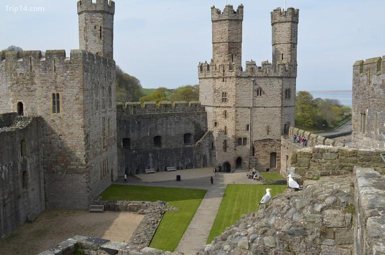 Lâu đài Caernarfon, Wales © eGuide Travel / Flickr - Trip14.com