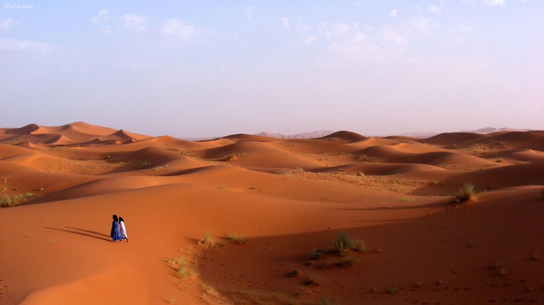 Sa mạc Sahara   |