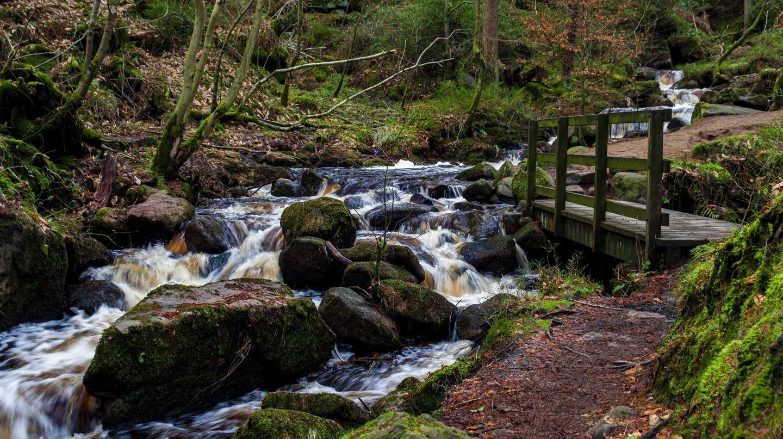 Khu bảo tồn thiên nhiên Wyming Brook, ở Yorkshire, là một trong những điểm đẹp nhất ở Vương quốc Anh