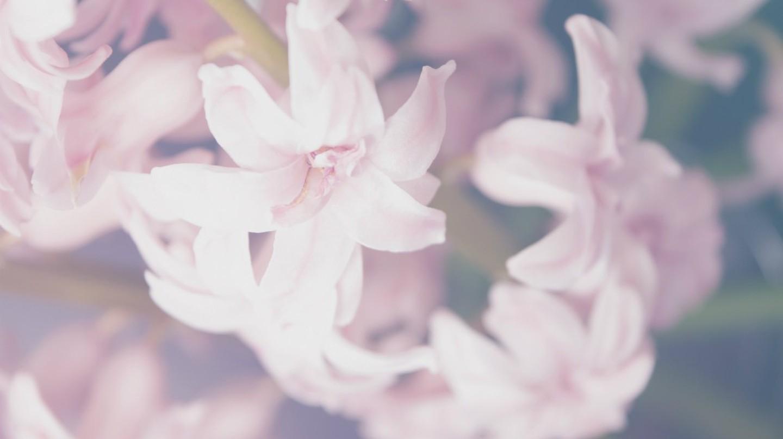 Hoa |  © Aleksandar Radavonovic / Unsplash