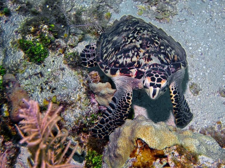 Bắt gặp một con rùa biển trong chuyến lặn biển ở San Andres