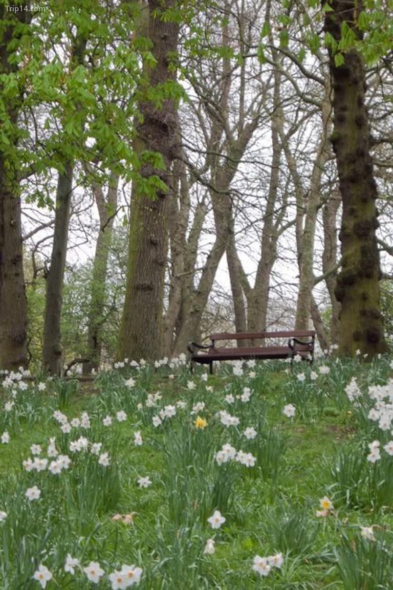 Vườn Giếng Thánh Ann  