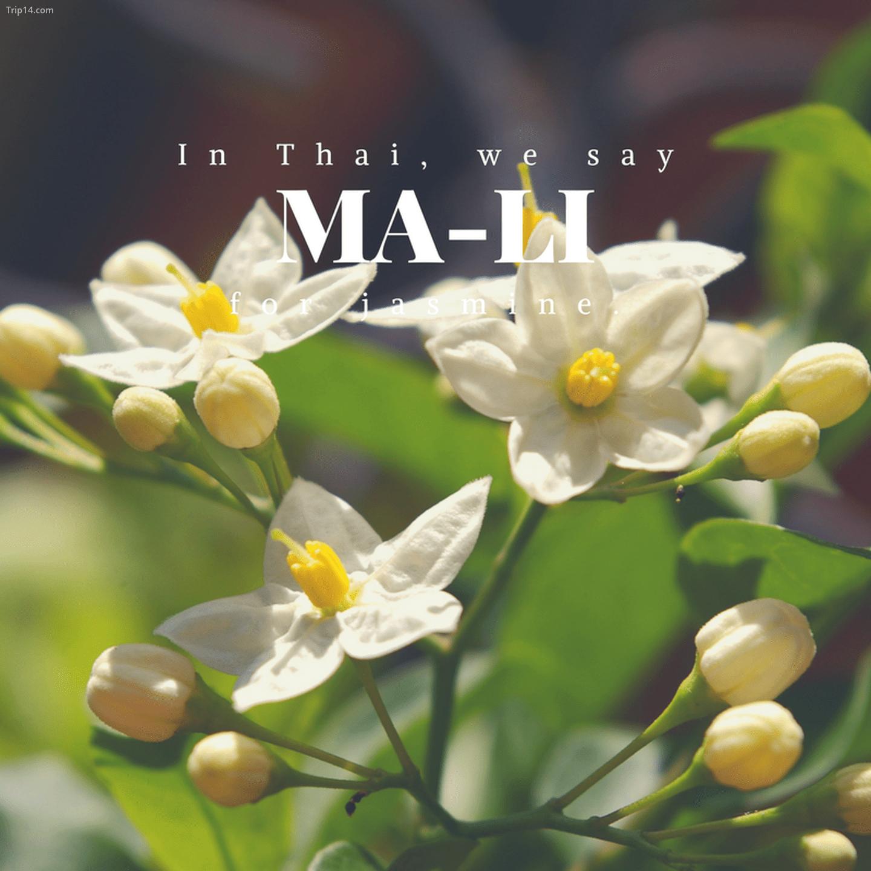 มะลิ: Ma-li