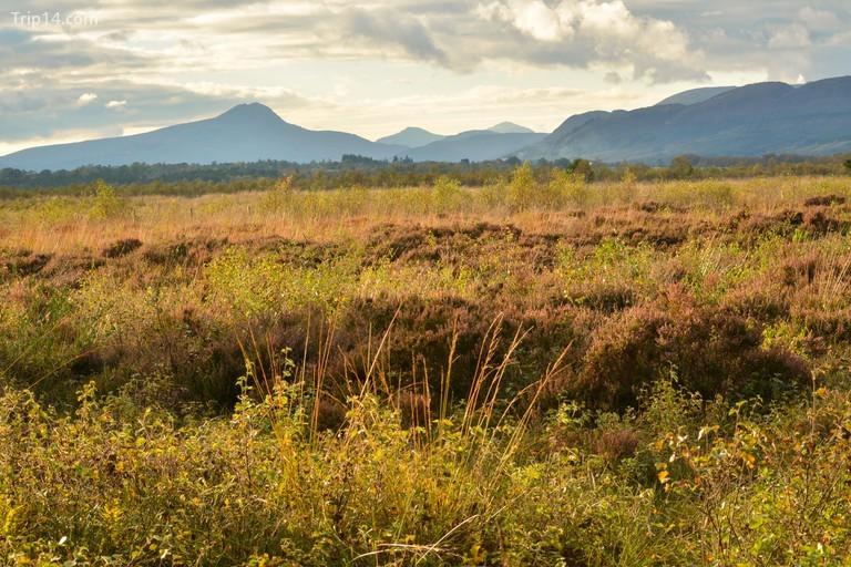 Khu bảo tồn thiên nhiên Flanders Moss, Scotland