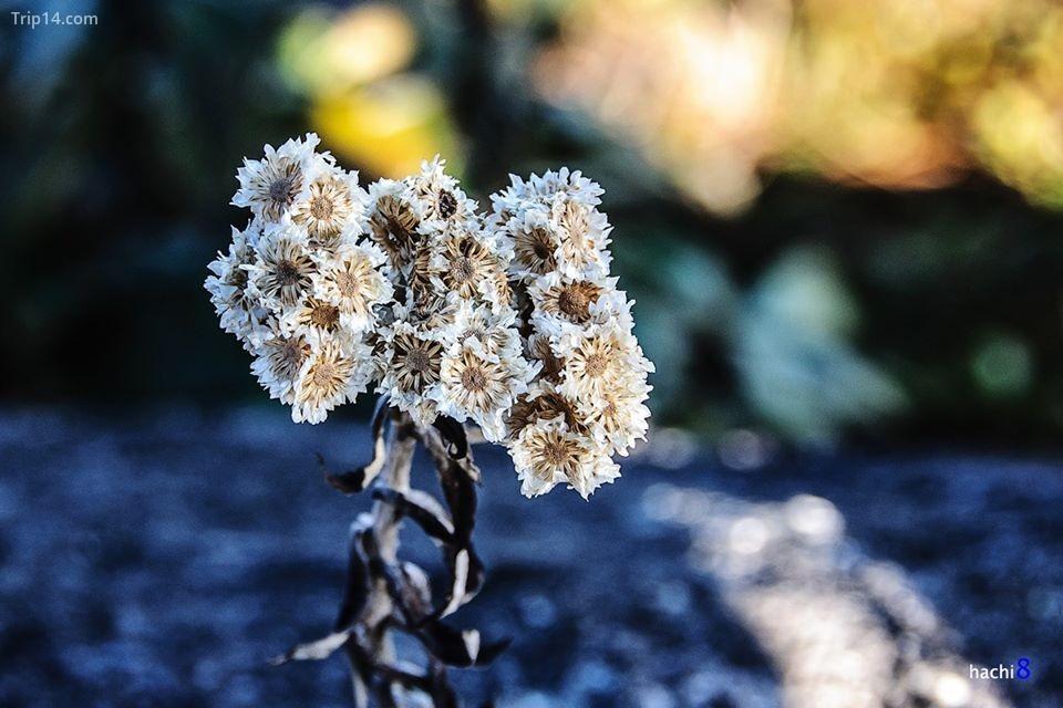 hoa ven đường núi Muối