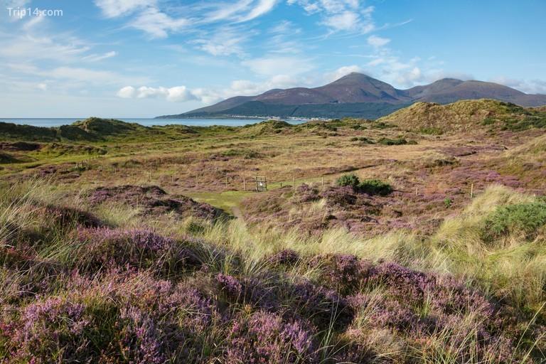 Khu bảo tồn thiên nhiên quốc gia Murlough