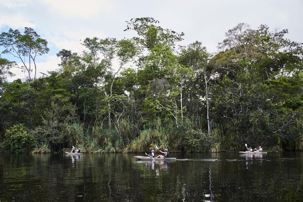 Chuyến tham quan chèo thuyền kayak dọc theo một nhánh của sông Amazon