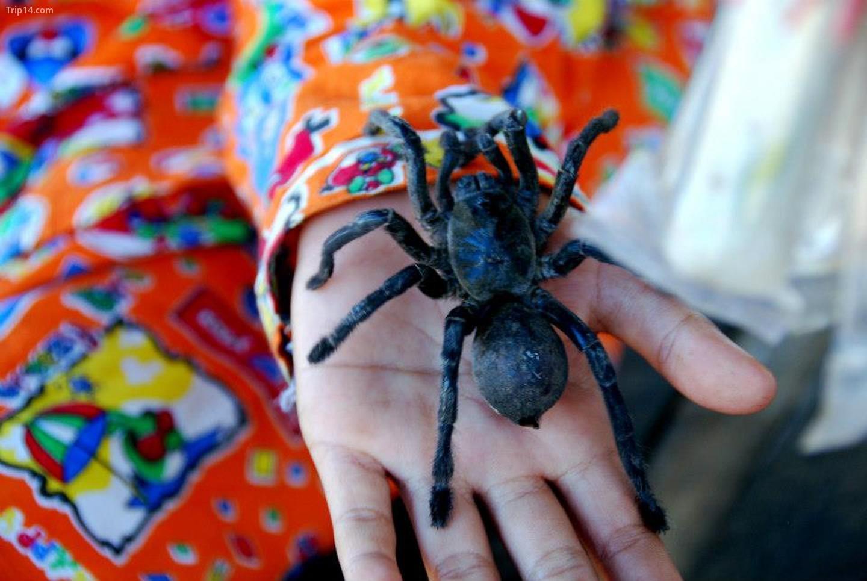 Một đứa trẻ cầm tarantula sống tại quầy hàng ở Skuon