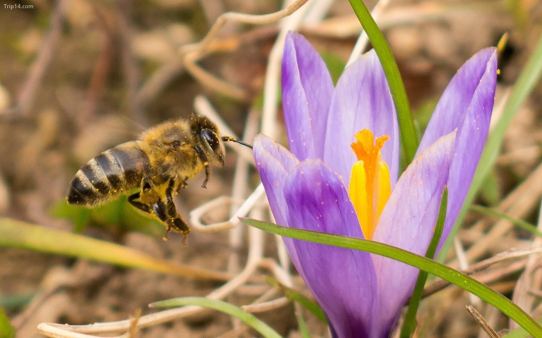 Vesna - mùa xuân ở Croatia   |   Dejan Hudoletnjak / Flickr