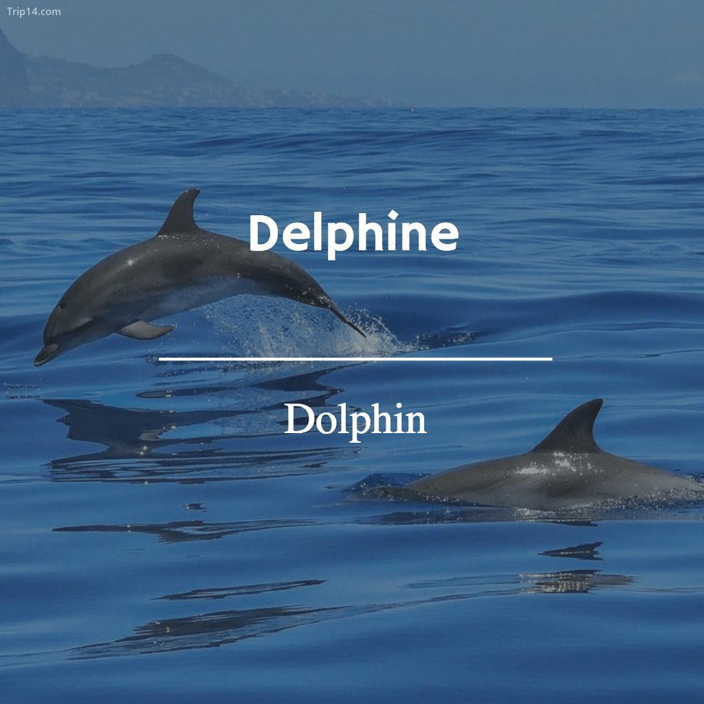 Delphine - Dolphin