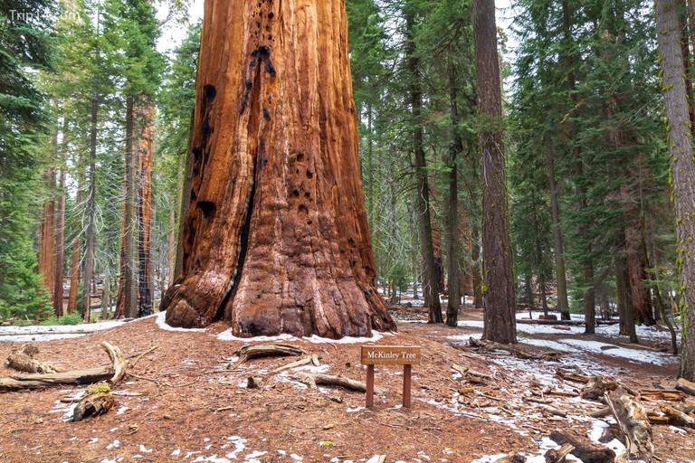 cây General Sherman ở vườn quốc gia Sequoia, Hoa Kỳ
