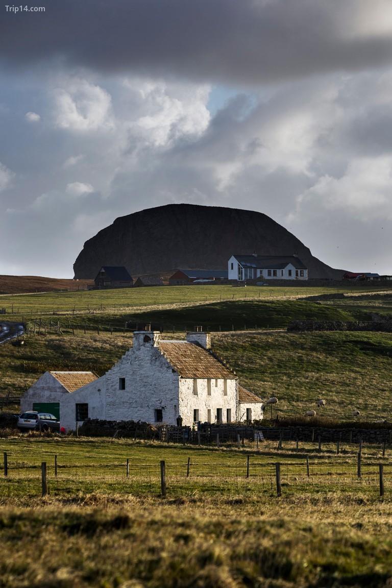 Trên hòn đảo đơn độc nhất của Anh, nằm ở Đại Tây Dương giữa Orkney và Shetland, số lượng cá nóc nhiều hơn con người khoảng 100 đến 1 © David Chapman / Alamy Kho ảnh