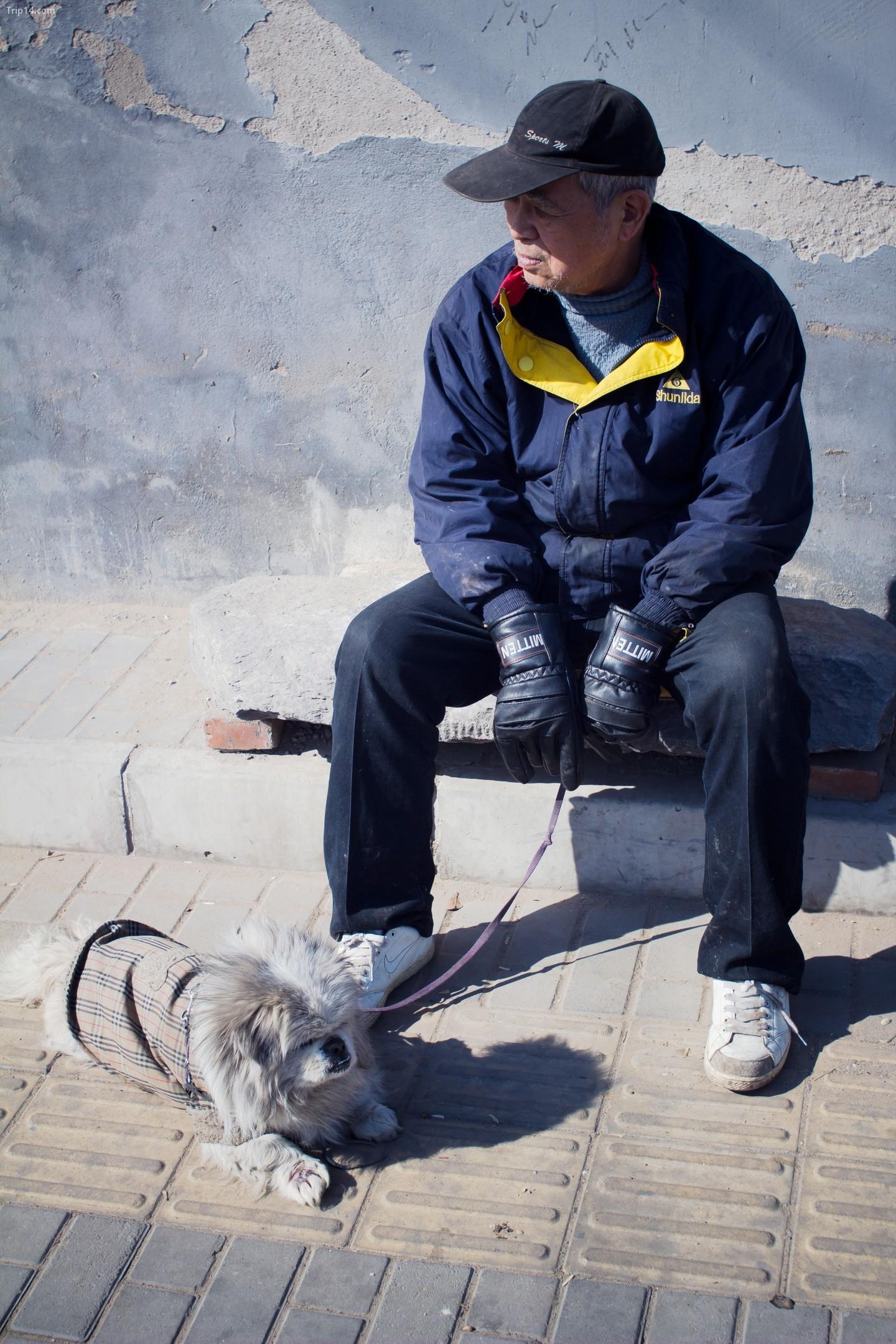 Một người đàn ông đang ngồi với con chó của mình ở Bắc Kinh.   |