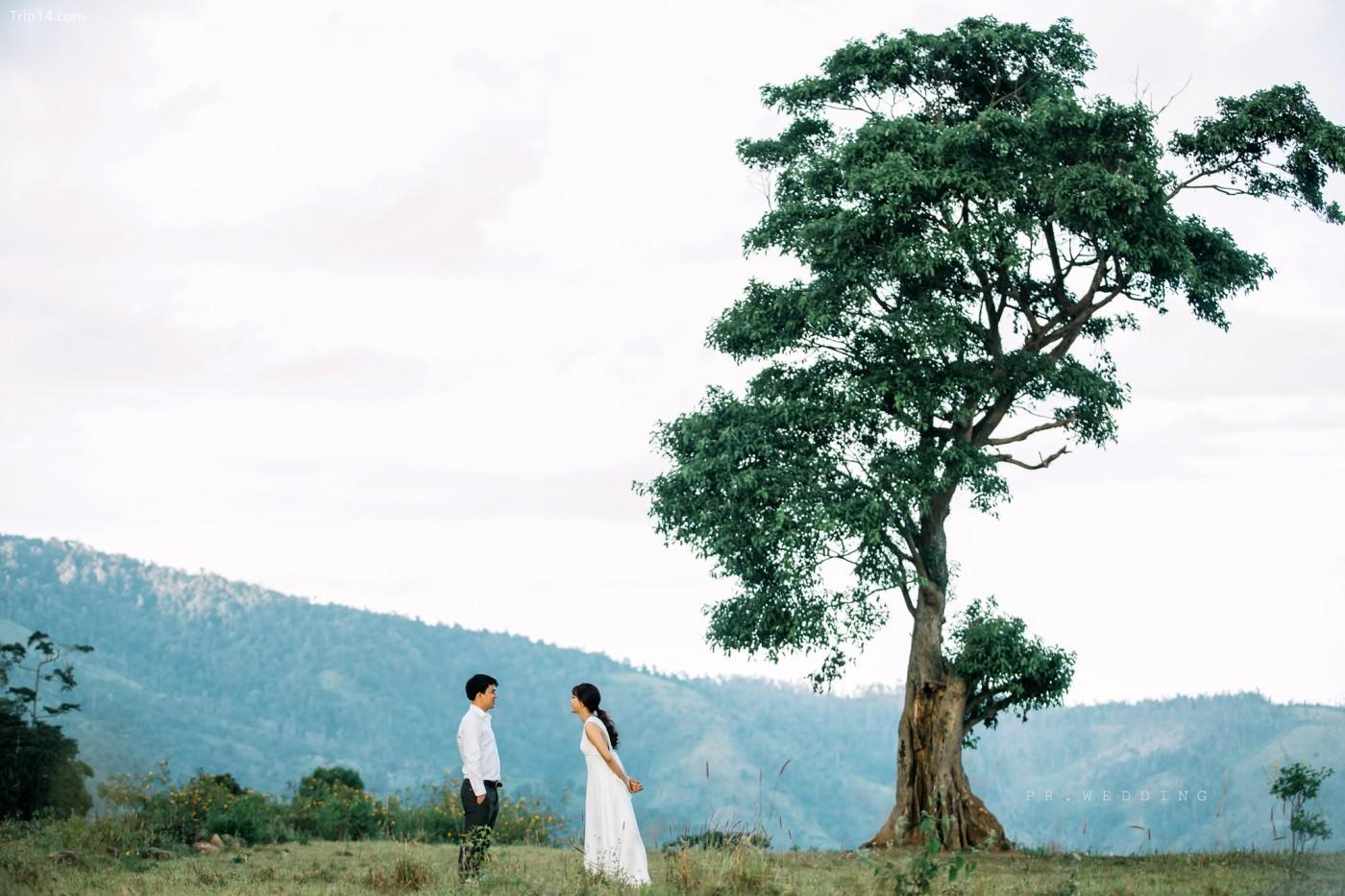 Cái cây cô đơn, ta đâu cô đơn